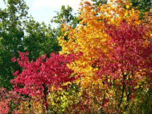 Bunter Herbst in Detershagen