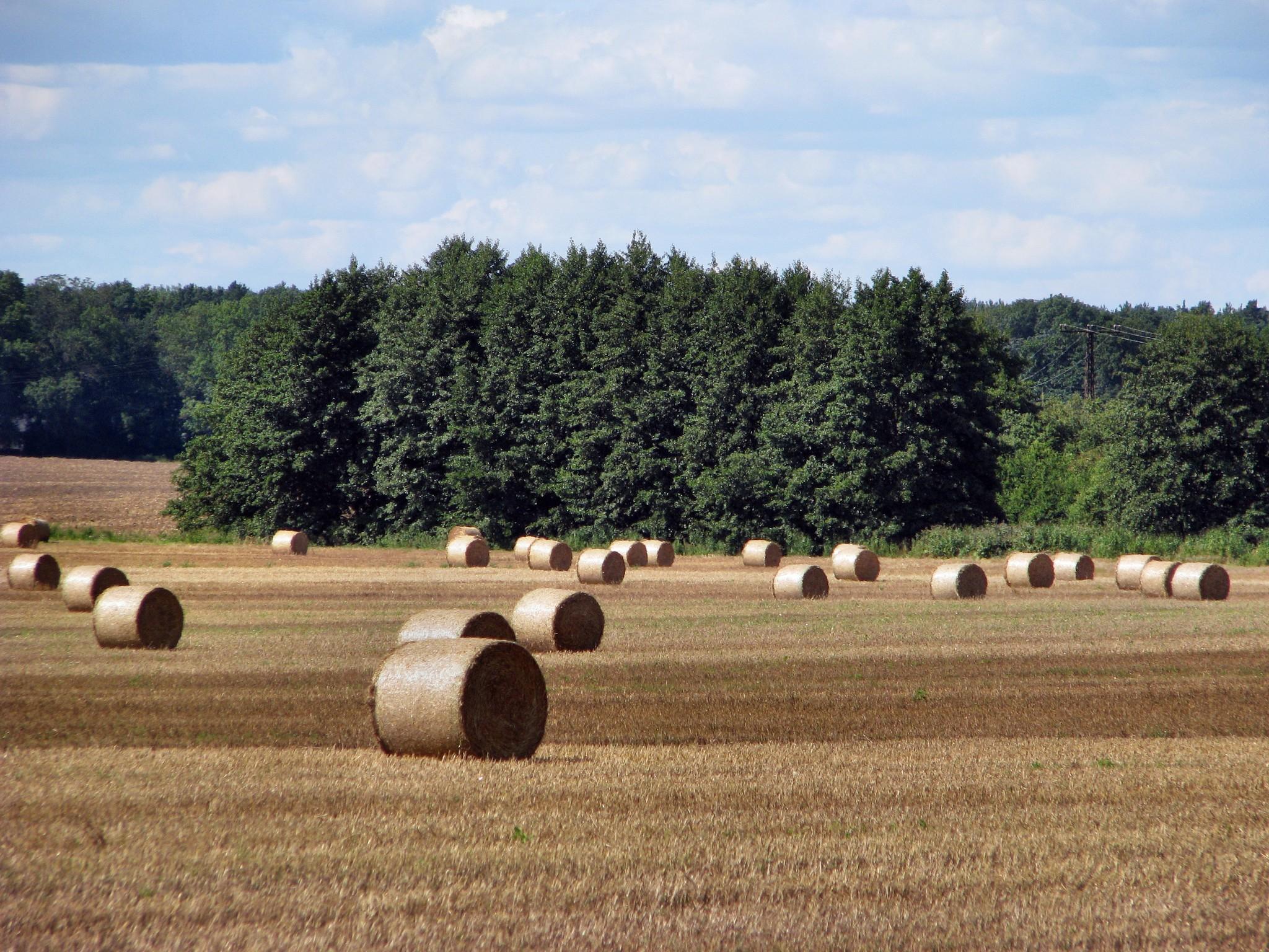 Herbst in Detershagen