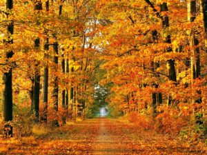 Herbstlaub in Detershagen