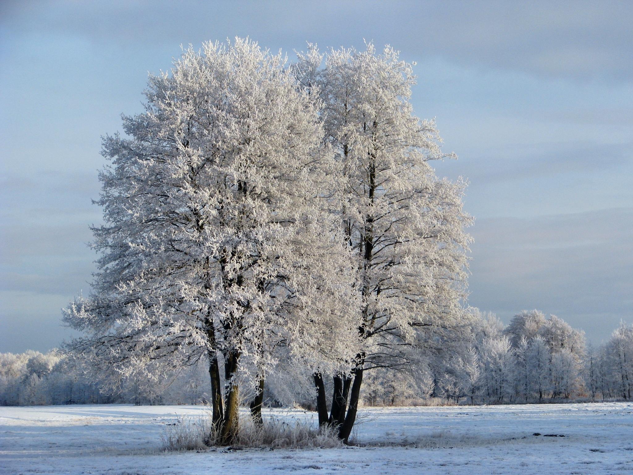 Winter in Detershagen